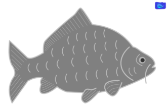 Carp art graphic, fishing design