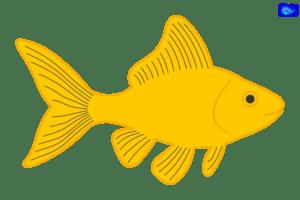 Goldfish art graphic, fishing design