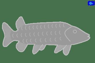 Pike art graphic, fishing design