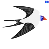 Swallow graphic design