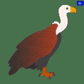 Vulture - bird art design